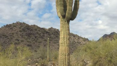 Hiking Through the McDowell Mountains